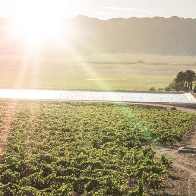 Vineyards at sunset and irrigation canal.